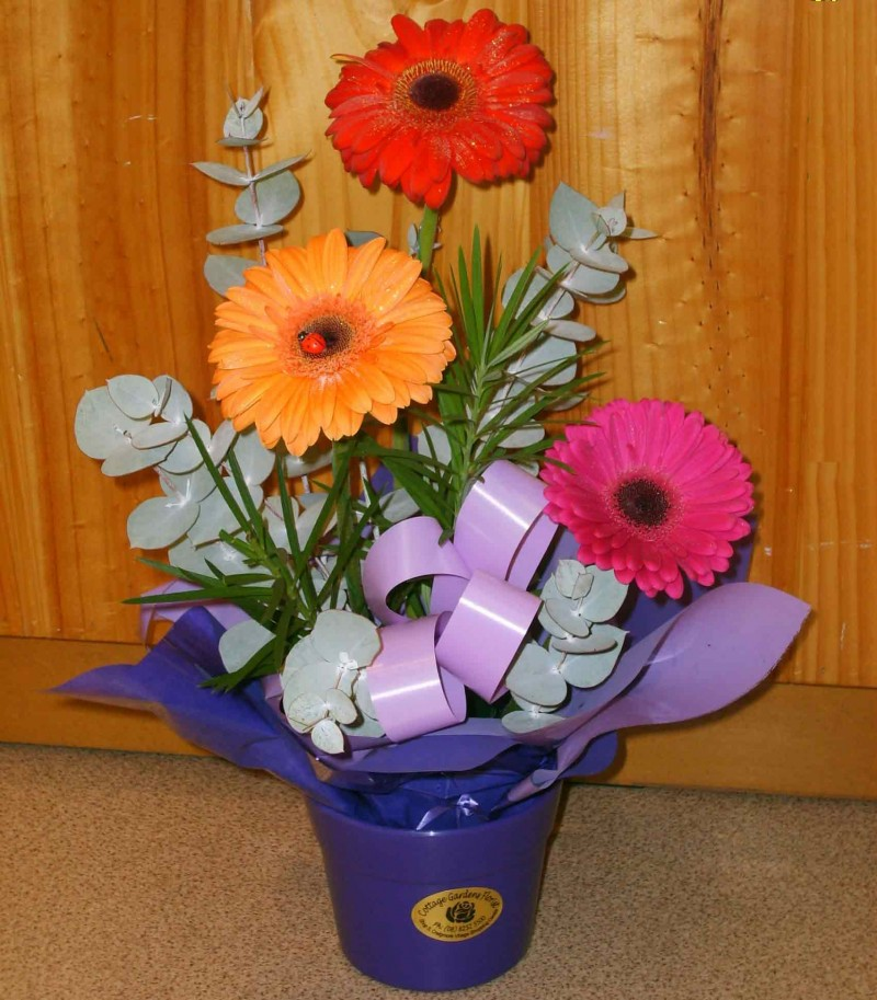 Fresh Gerbera Box Arrangement - Fresh Flowers - Flowers R Us